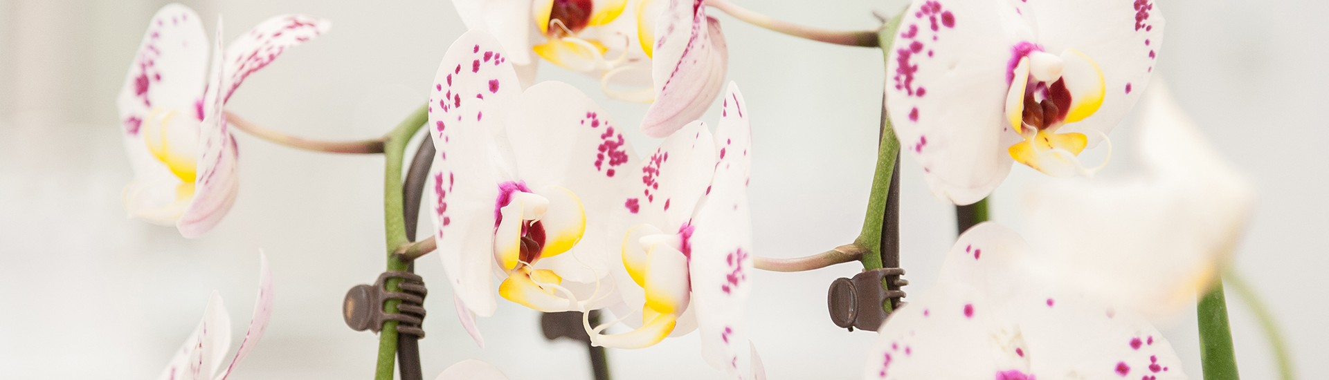 Kbal-hairstylist-Kapsalon-Amsterdam-flowers